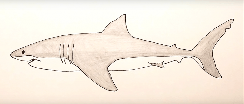 How to Draw shark