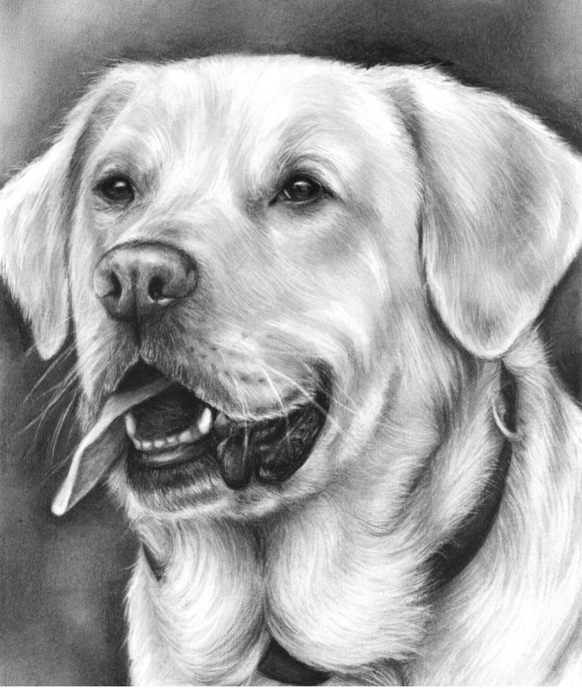 Dog Drawing Realistic Full Video Tutorial
