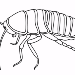 how to draw a Cockroach