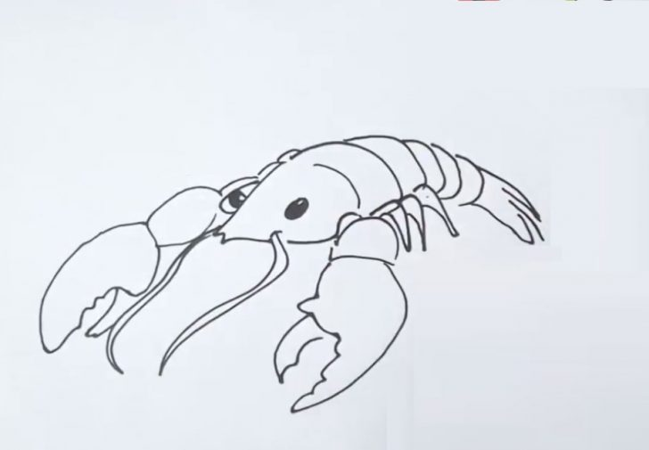 lobster drawing