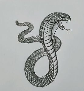 Snake Drawing Easy